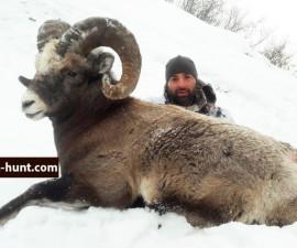 Охота на Якутского  барана