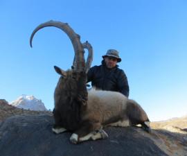 Охота на персидского пустынного козерога