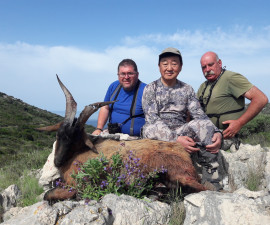 За гибридным горным козерогом кри-кри и долматинским диким бараном в Хорватию