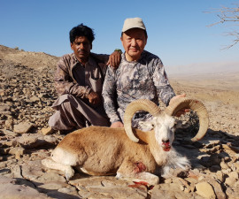 Hunt for the Sindh Ibex and the Blandford Urial in Pakistan