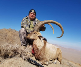 Hunting for Persian Desert Ibex