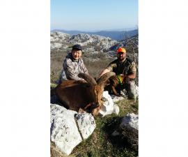 Охота на гривистого барана