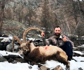 Охота на Алтайского козерога
