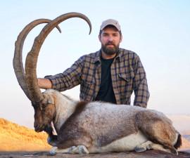 Синдхский козел
