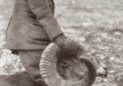 Тяньшанский архар, добытый Кермитом Рузвельтом на р. Текес, 1925 г. Фото: Кермит Рузвельт