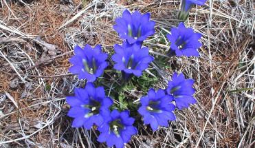 Цветы в горах Саян