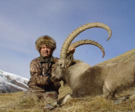Алтайский горный козел