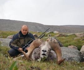 Охота на алтайского аргали