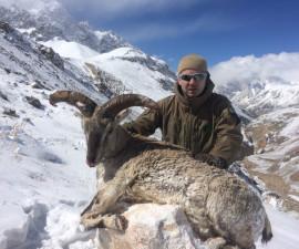 Охота на голубого барана