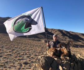 Белая полоса в Иране. История охоты на Керманского барана