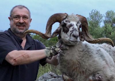 Охота на дикого Далматинского барана