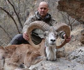 Охота на бухарского уриала в Узбекистане