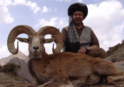 Afghan Urial