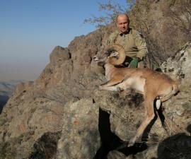 Охота на аргали Северцова