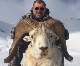 Охота на  Тибетского барана