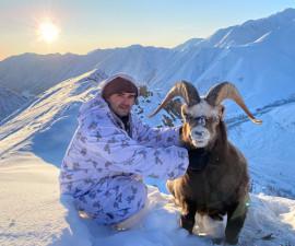 Снежный баран из Якутии
