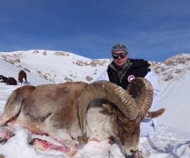 Охота в Киргизии на Тяньшаньского архара