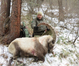 Охота на алтайского козерога в Казахстане