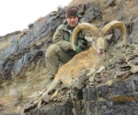 Охота на керманского барана в Иране