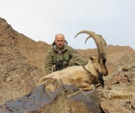 Охота на безоарового козерога в Иране