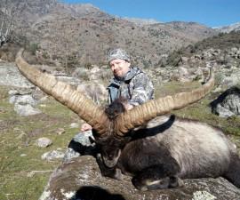 Охота на гредосского козерога в Испании
