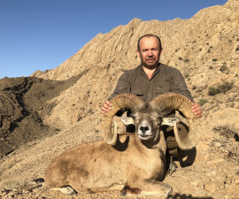 Esfahan Mouflon