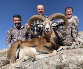 Konya Mouflon (Free Range)