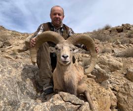 Shiraz Mouflon