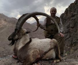 Южный Персидский Пустынный Козерог. Иран