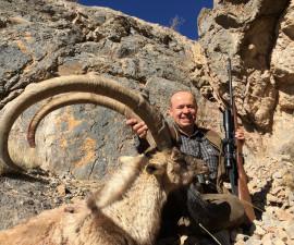 Безоаровый горный козёл. Иран