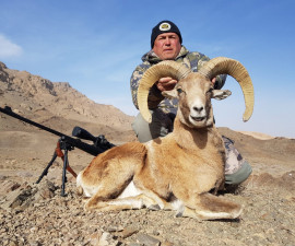 Hunting for Esfahan mouflon