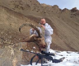 Козерог Сибирский