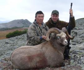 Охота на колымского барана