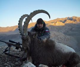 Сибирский горный козел в Таджикистане