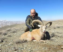 Охота на исфаханского муфлона