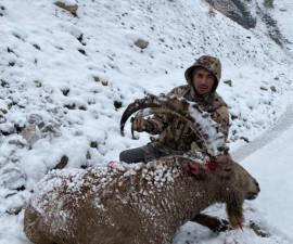 Охота на козерога в Узбекистане