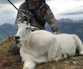 Cнежная коза