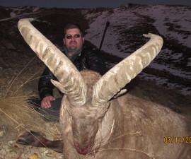 Охота на среднекавказского тура