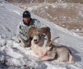 Охота на тянь-шанского аргали