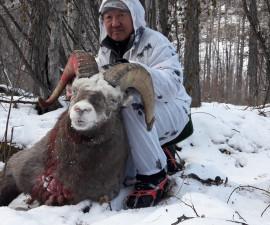 За якутским снежным бараном в Республику Саха (Якутия)