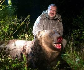 Медведь бурый европейский РСК