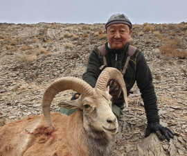 За исфаханским муфлоном в Иран
