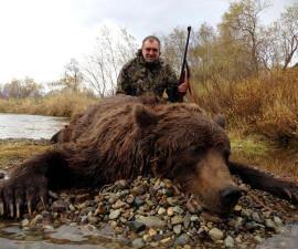 Медведь бурый камчатский РСК