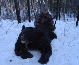 Амурский медведь