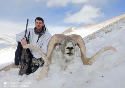 Охота на Аргали Марко Поло в Таджикистане