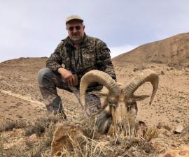 Охота на афганского уреала в Иране