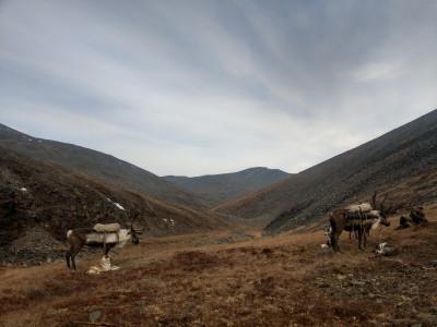 Охота на снежного барана в Якутии в 2020 году