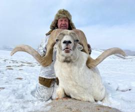 Аргали Марко Поло добытый в Таджикистане