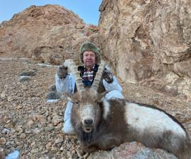 Козёл горный Памирский в Таджикистане