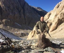 Охота на памирского козерога